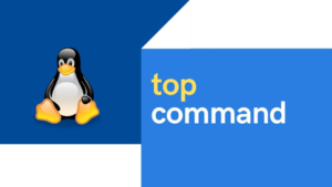 20+ top command examples in Linux [Cheat Sheet]